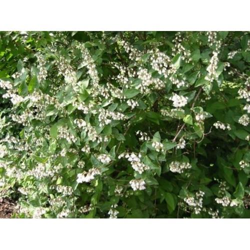 Kit haie libre fleurie semi persistante achat vente kit haie libre fleurie semi persistante pas - Haie persistant fleurie ...