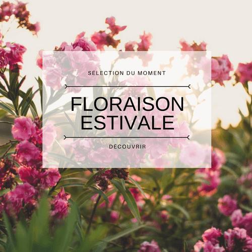 Plante floraison estivale
