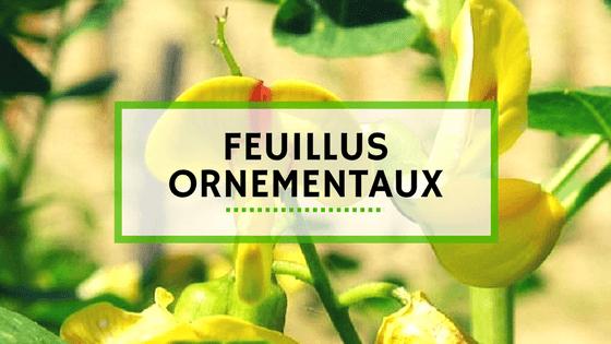 Vente Plantes - Feuillus Ornementaux