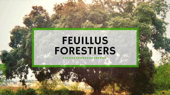 Vente Plantes - Feuillus Forestiers
