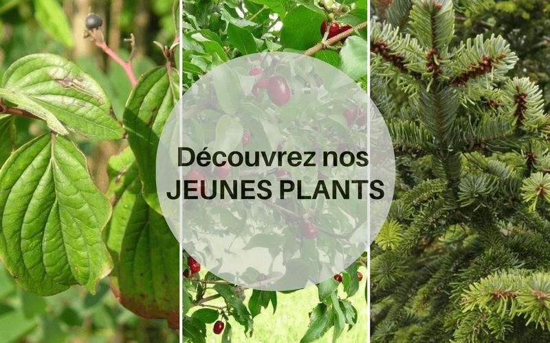 Découvrez nos jeunes plants