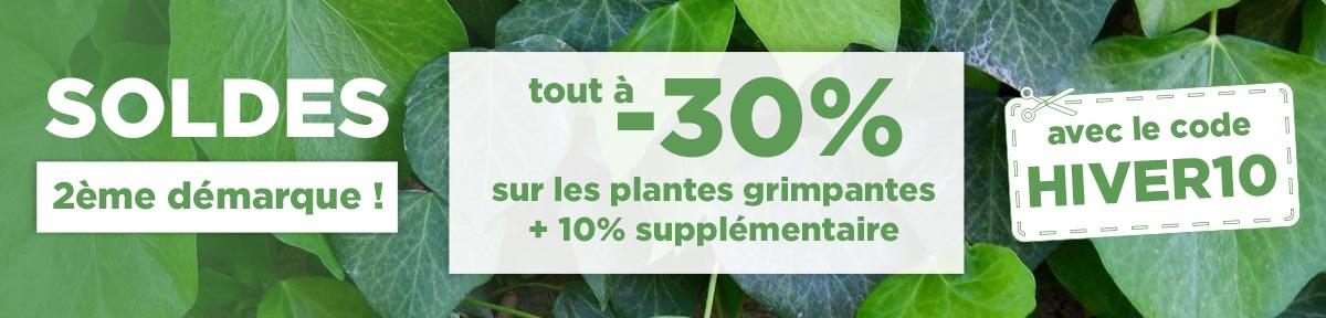 Vente de plantes grimpantes