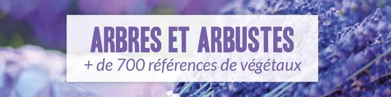 Vente en ligne arbres et arbustes - Pépinière Naudet