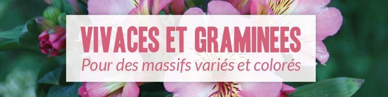 Vente en ligne de plantes vivaces et graminées