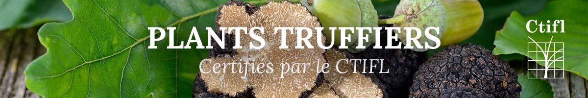Vente de plants truffiers