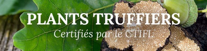 Vente en ligne arbres truffiers de Bourgogne et arbres truffiers du Périgord