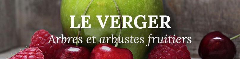 Vente arbres fruitiers, arbustes fruitiers et grimpantes fruitières