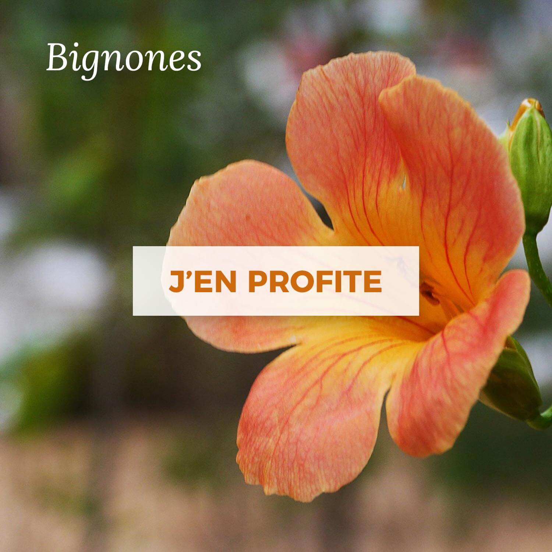 Achat de Bignones