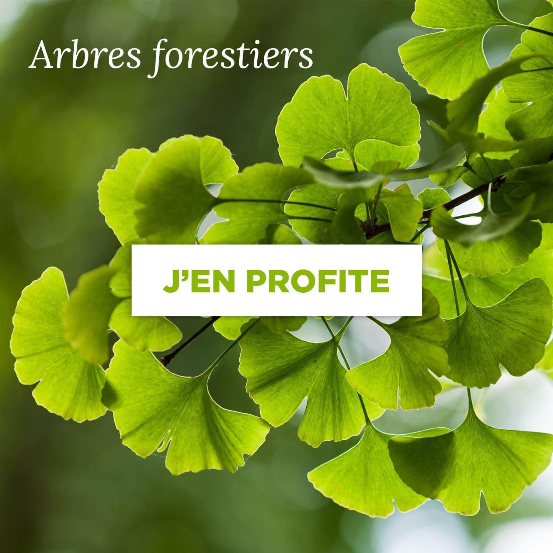 Acheter un arbre forestier
