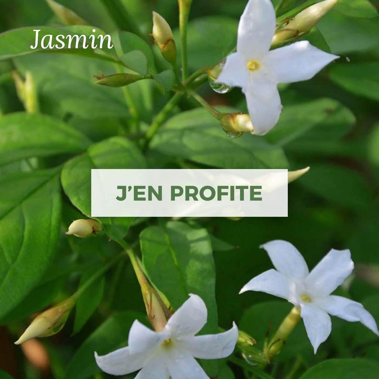 Achat de Jasmin