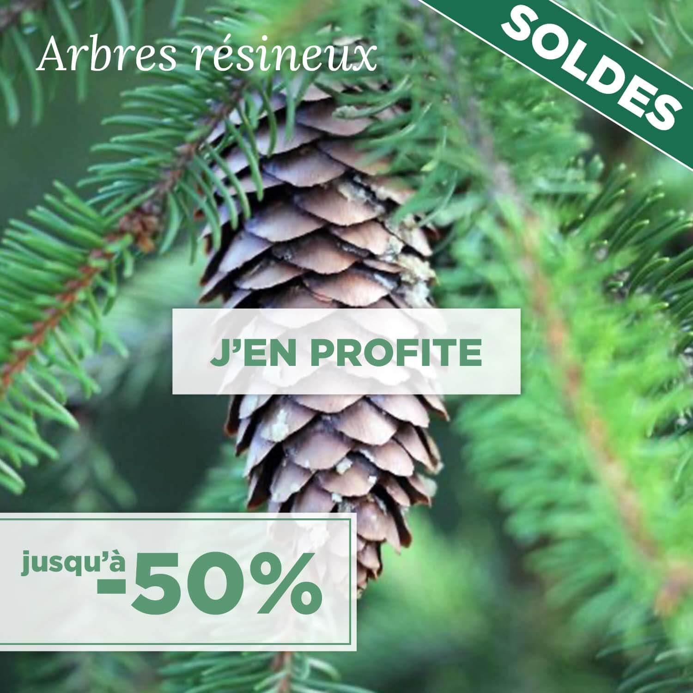 Acheter un arbre résineux