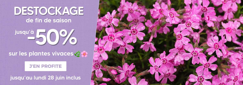 Vente en ligne plantes vivaces - Pépiniériste en ligne - Pépinières Naudet