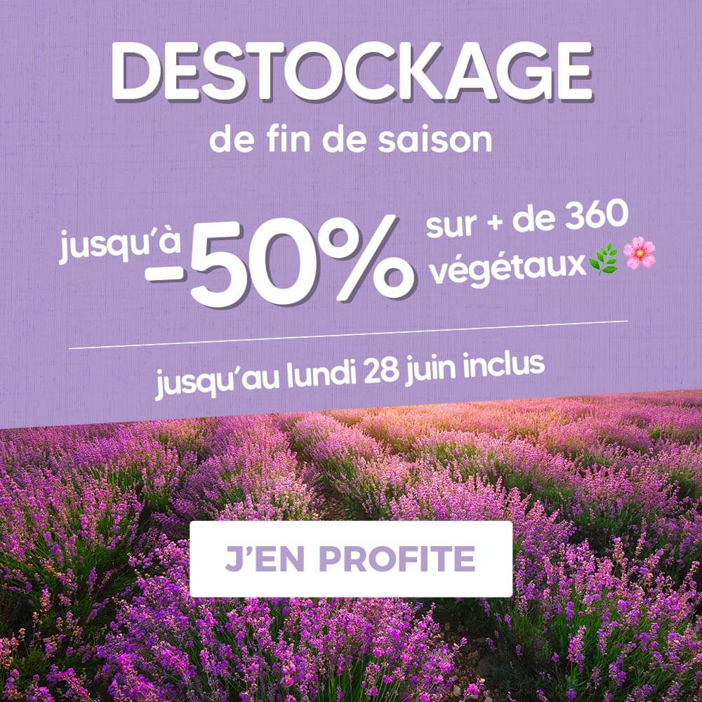 Pépinière en ligne - vente en ligne de végétaux