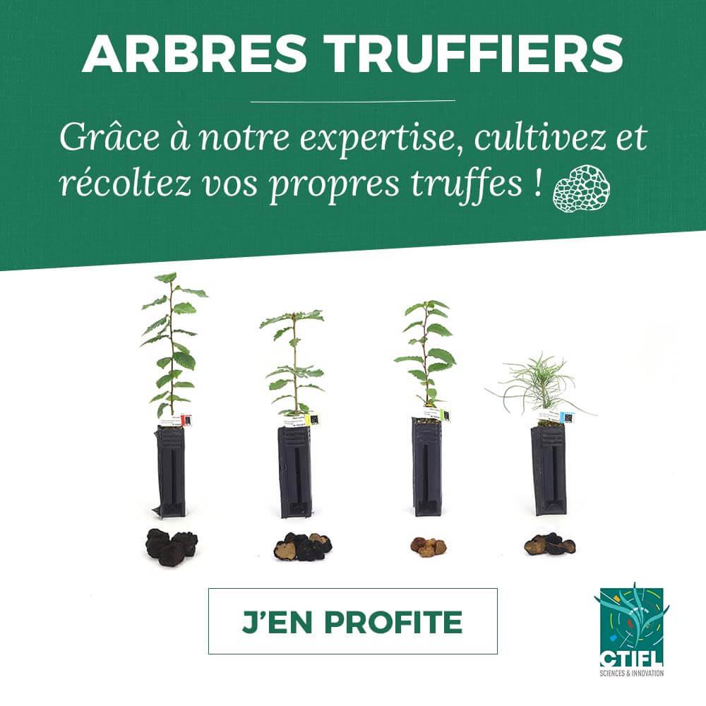 Vente en ligne d'arbres truffiers