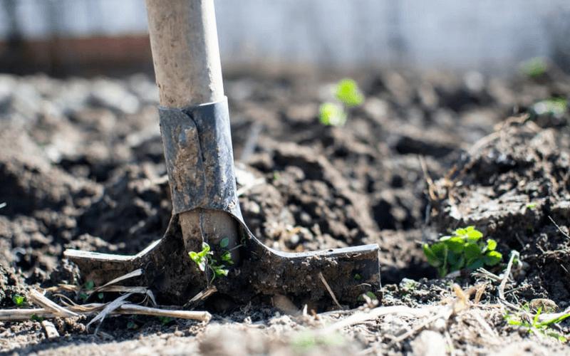 Conservation de vos jeunes plants avant plantation