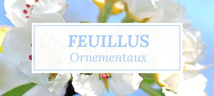 Arbres feuillus ornementaux - Pépinières Naudet