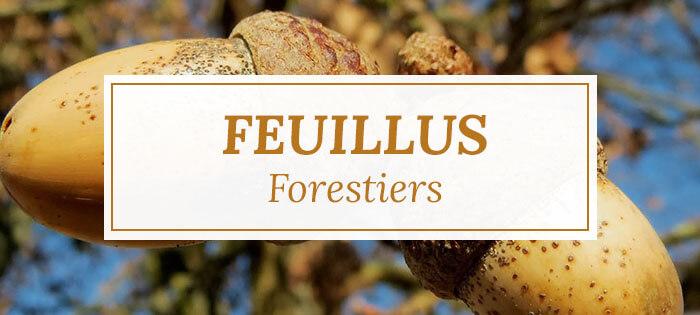 Arbres feuillus forestiers - Pépinières Naudet