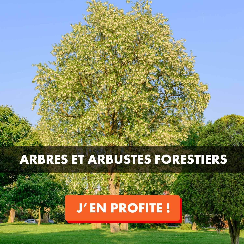 Vente arbre et arbuste forestier