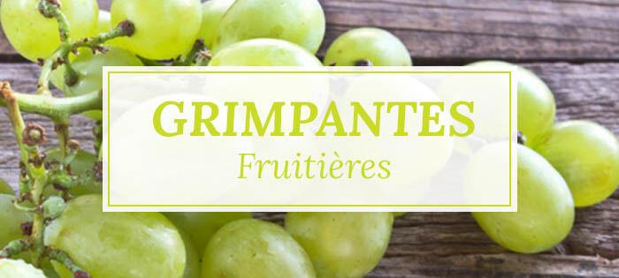 Vente de grimpantes fruitières - Pépinières Naudet