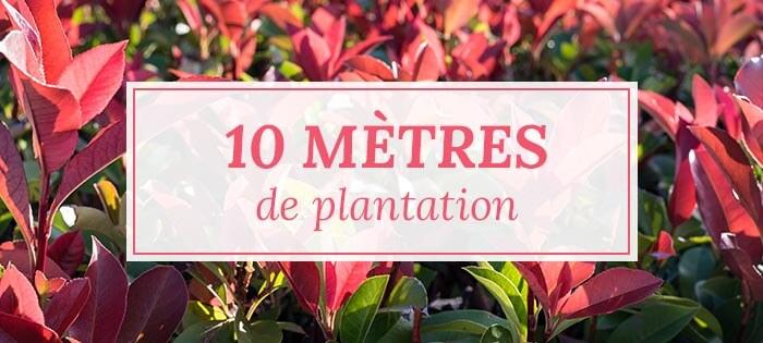 Kits haies pour 10 mètres de plantation - Pépinières Naudet