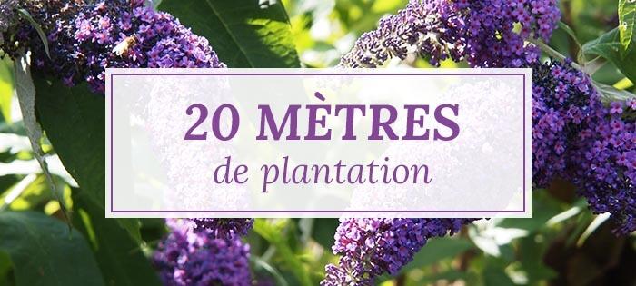 Kits haies pour 20 mètres de plantation - Pépinières Naudet