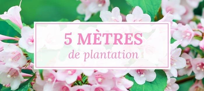 Kits haies pour 5 mètres de plantation - Pépinières Naudet