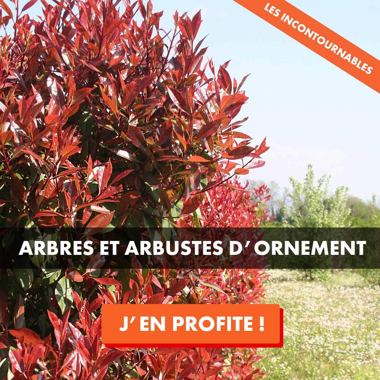 Vente arbre et arbuste d'ornement