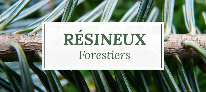 Arbres résineux forestiers - Pépinières Naudet