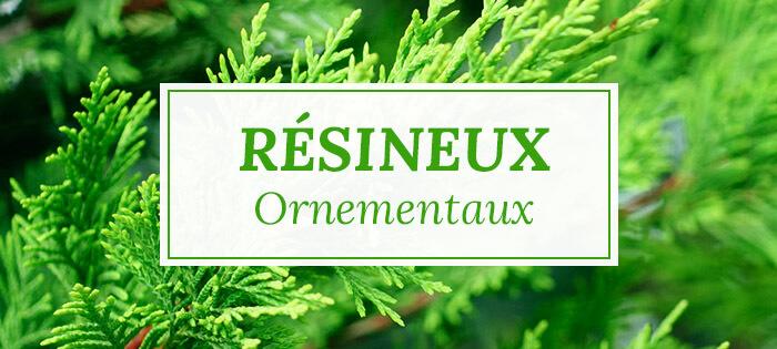 Arbres résineux ornementaux - Pépinières Naudet