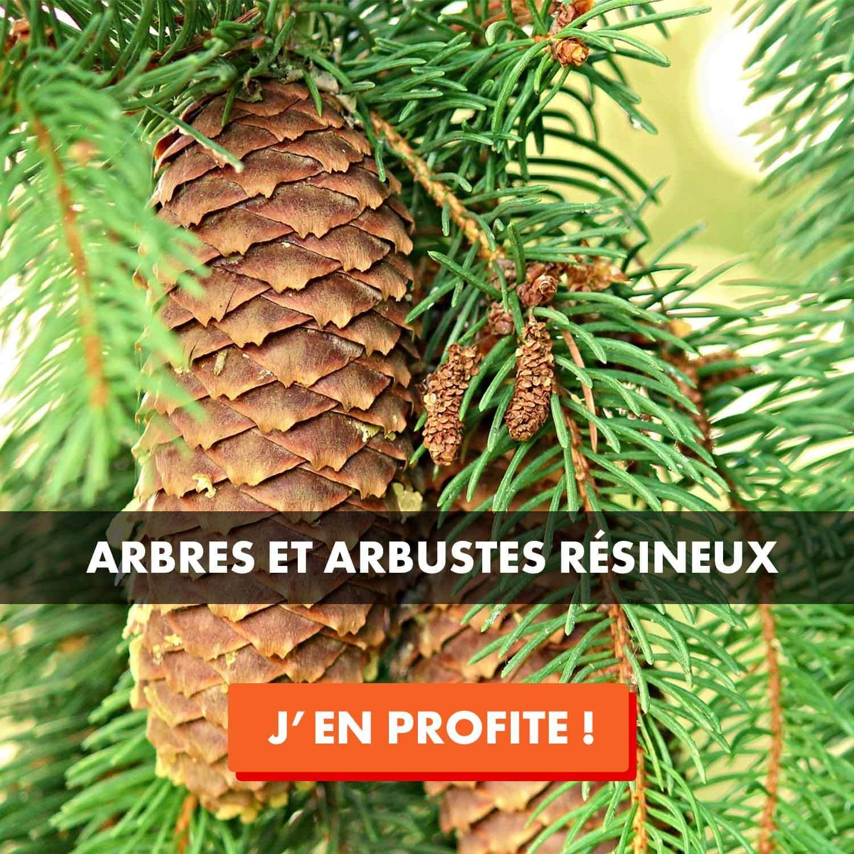 Vente arbre et arbuste résineux
