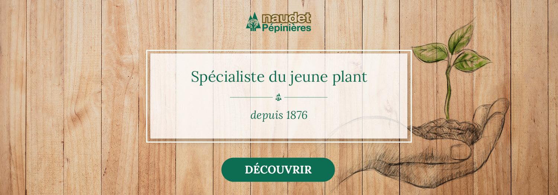 Pépinières Naudet - Vente de plantes en ligne