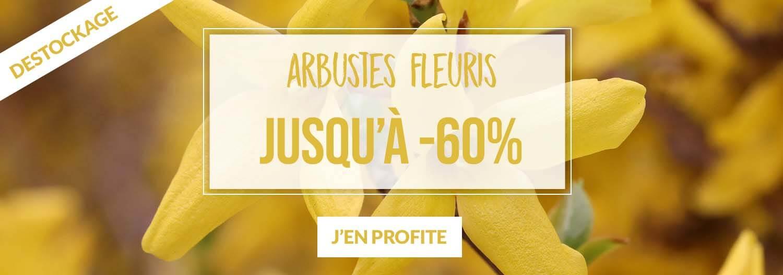 Arbustes fleuris jusqu'à -60% - Pépinières Naudet