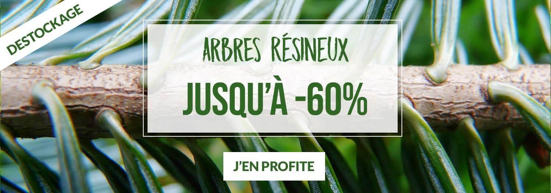 Arbres résineux jusqu'à -60% - Pépinières Naudet