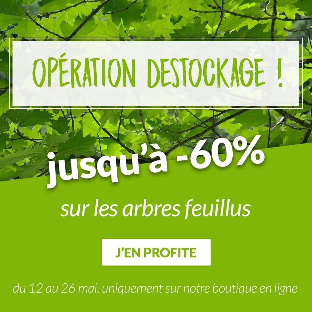 Arbres feuillus jusqu'à -60% - Pépinières Naudet