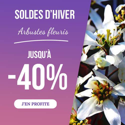Pépinières Naudet - vente en ligne d'arbustes fleuris