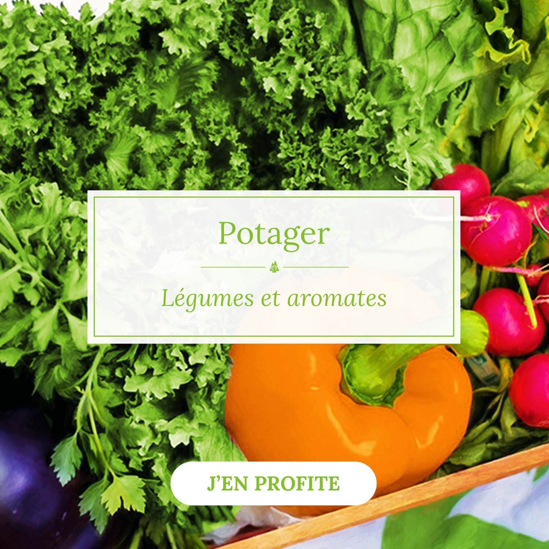 Légumes et aromates à cultiver - Pépinières Naudet