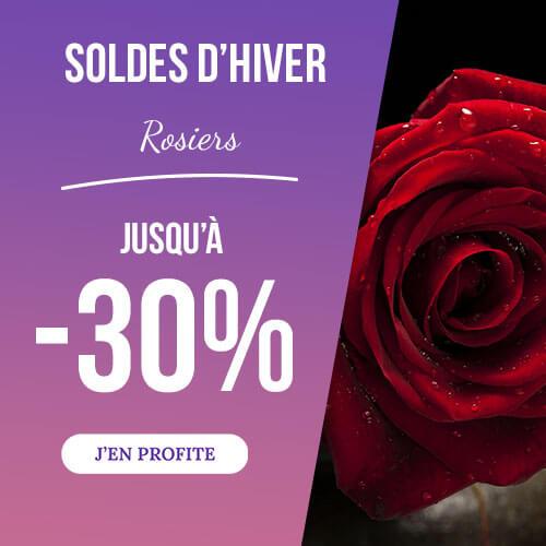 Pépinières Naudet - vente en ligne de rosiers