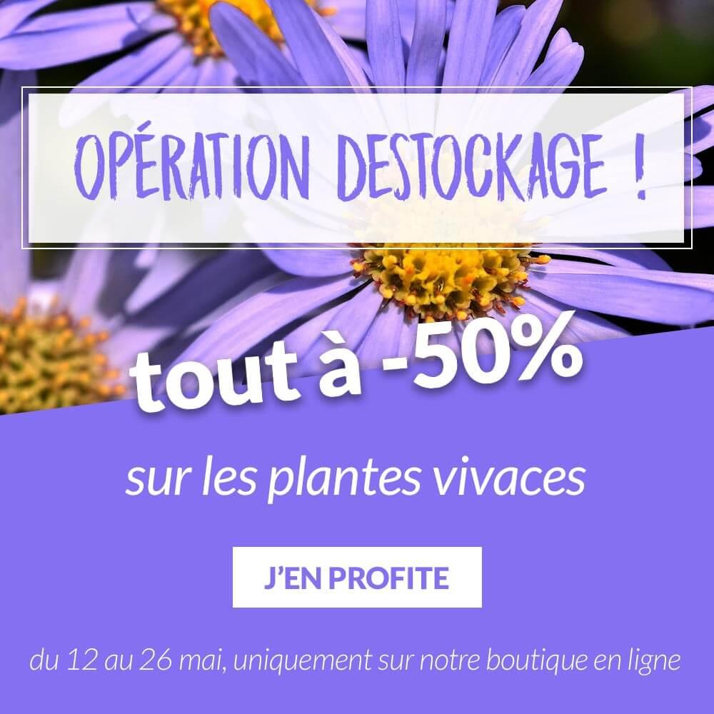 Tout à -50% sur les Vivaces - Pépinières Naudet