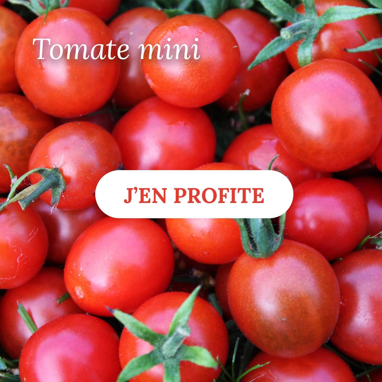 Vente de tomate mini - Pépinières Naudet