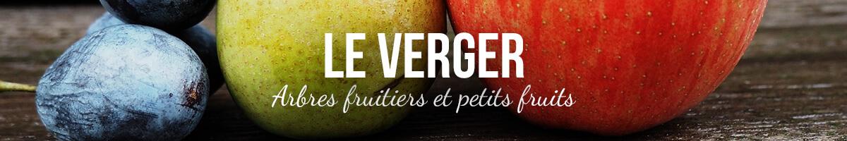 Vente d'arbres fruitiers - Pépinières Naudet