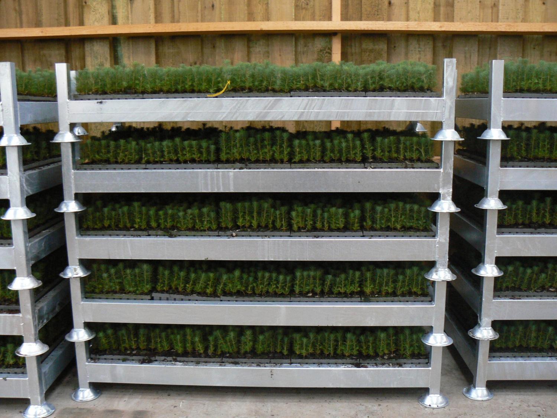 jeunes plants en godets forestiers exp rience en plantation hors sol p pini res naudet. Black Bedroom Furniture Sets. Home Design Ideas