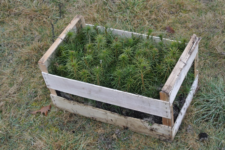 Planter Dans Une Caisse En Bois réception des plants, conseils de conservation des plants